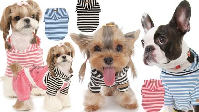 Мода для домашних животных